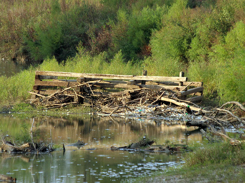 A newly exposed heavy timber framework—possibly once part of Lock and Dam Number 4.