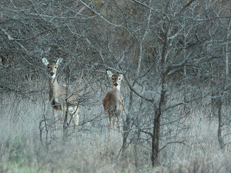 Journal - Checking Trail Cameras