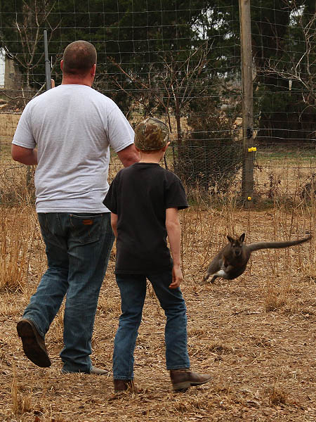 This Wallaby wants no part of this.  Just look at him go!