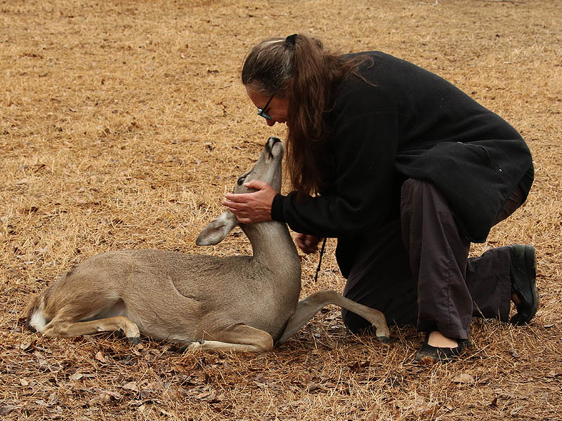 The deer received comfort and reassurance for their caretakers.