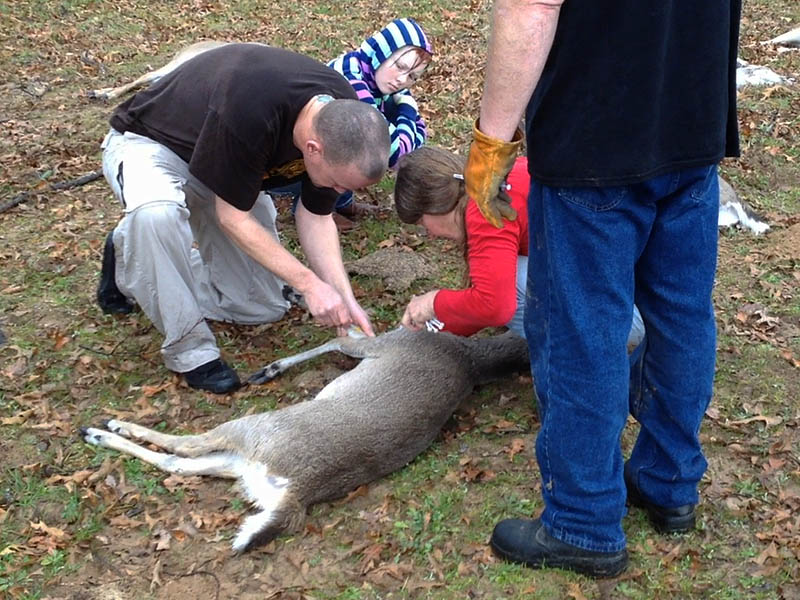 Injecting the deer to counteract the sedative.
