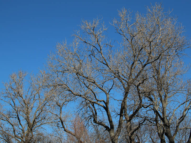 Bare branches against a brilliant blue winter sky.