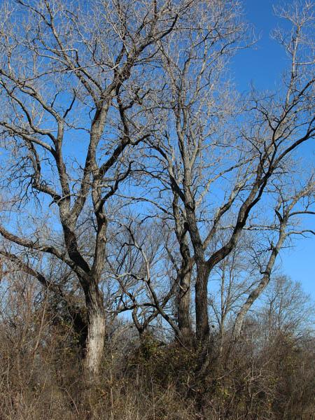 Wintertime songbird habitat.