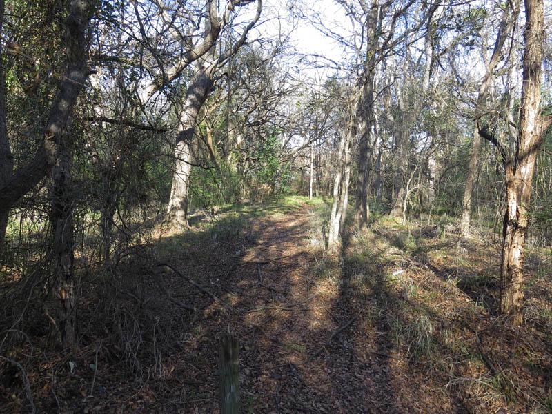 Soft surface trails near Prairie Creek.
