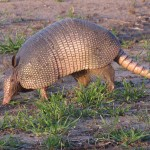 Armadillo - At the End of the Day
