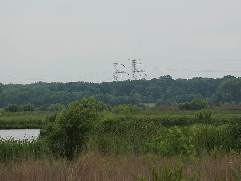 It's had to imagine a better place for the eagles to be than over looking the John Bunker Sands Wetland Center.