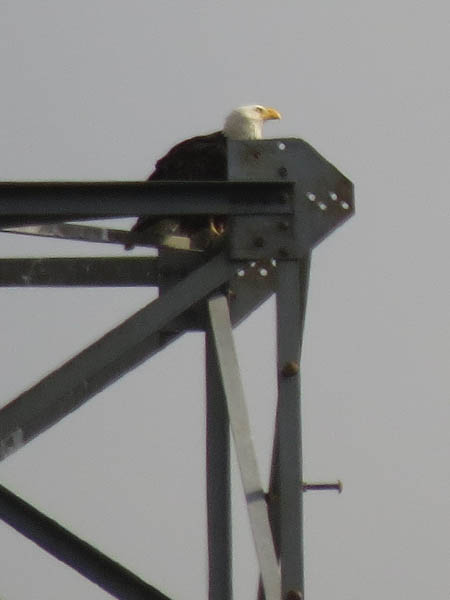 A lone adult at the top of the nest tower.