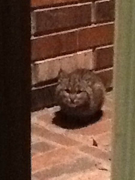 Day 6 - This Bobcat kitten was photographed trying to stay dry during a rain shower by seeking refuge on a front porch.