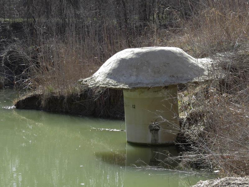 A Texas-sized mushroom!