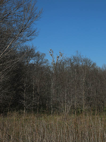 The heron rookery is located in the tall tree far off in the distance.