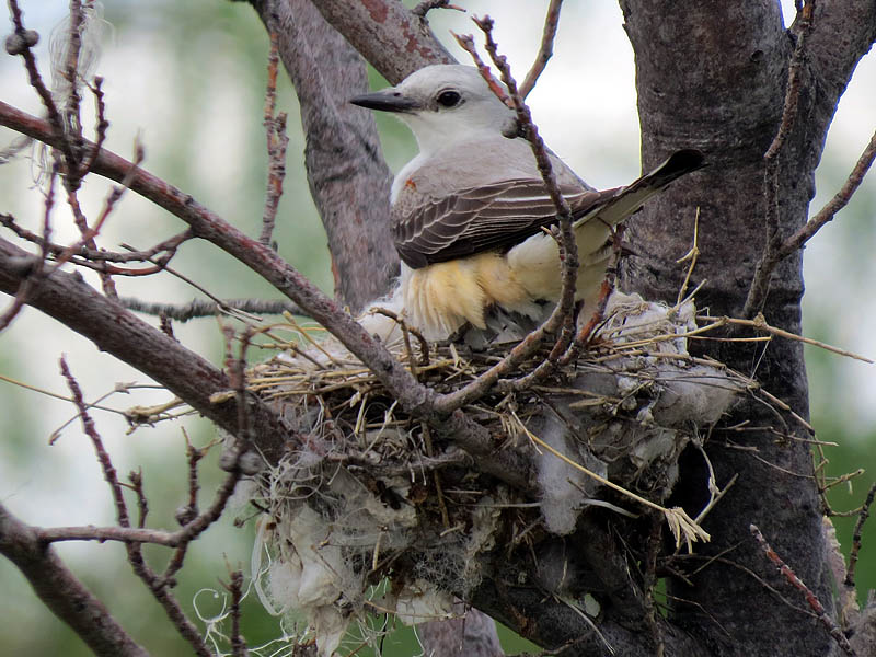 The mother flycatcher was busy this week.
