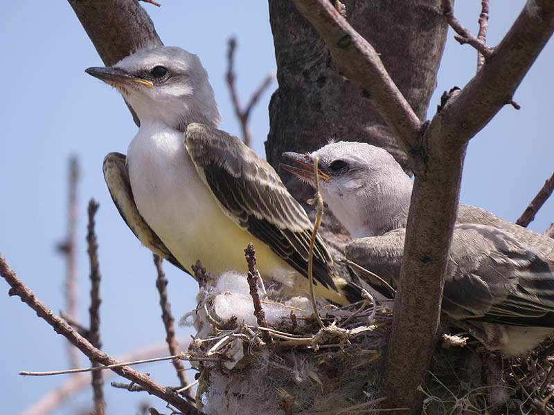 The young birds have come a long way in just one week.