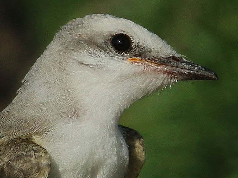 A closeup of one of the fledglings.
