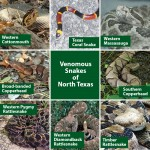 Venomous Snakes of the Dallas/Fort Worth Metroplex