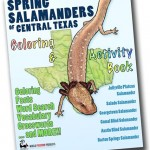 Announcement - Spring Salamanders of Central Texas