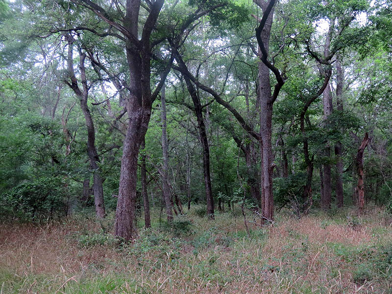 The Great Trinity Forest in far south Dallas.