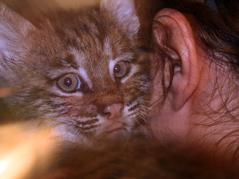 Devon, one of the two kittens rescued from a burn pile.