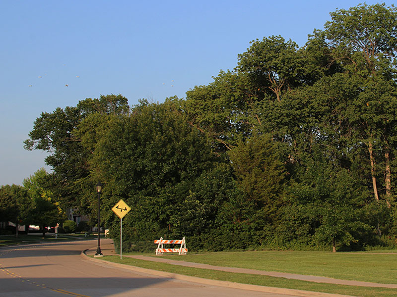 The approach to Stacy Ridge Park along Country Brook Ln.
