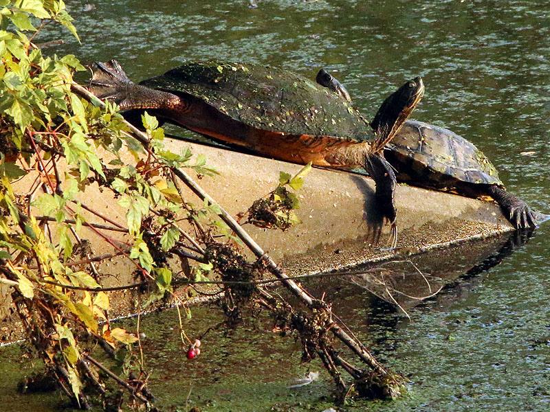 The same turtles from a different angle.