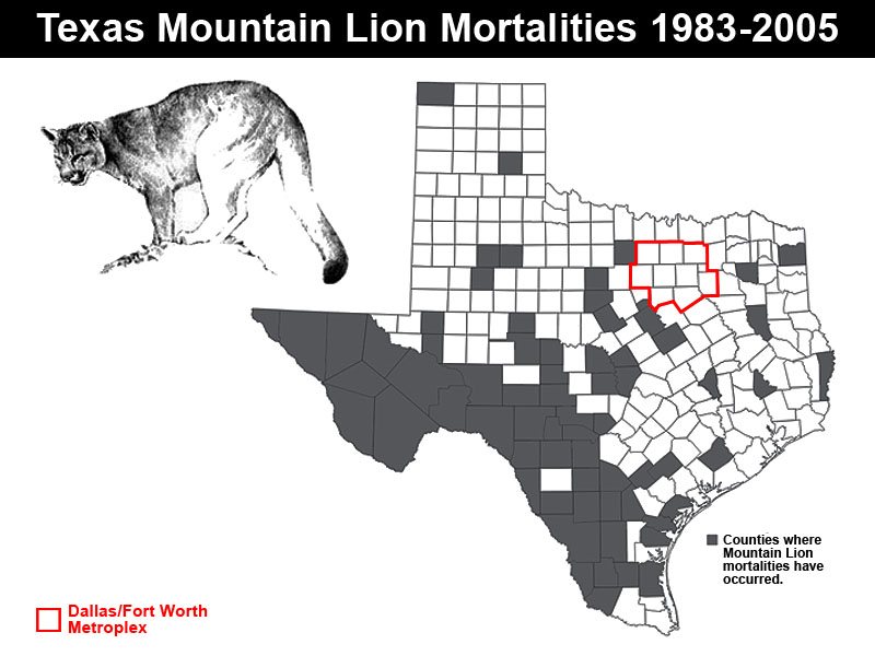 Are There Mountain Lions In The Dallas/Fort Worth Area