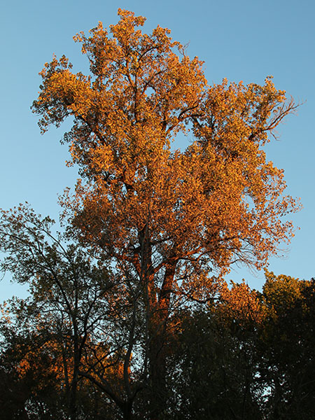 The tops of the trees were illuminated first by the rising sun.