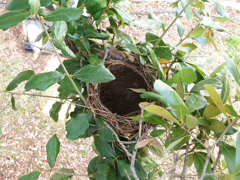 An adobe nest.