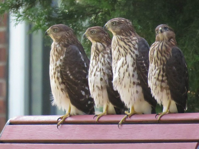 The four siblings.  Two males (small) and two females (big).