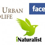 DFW Urban Wildlife Milestones: Facebook and iNaturalist