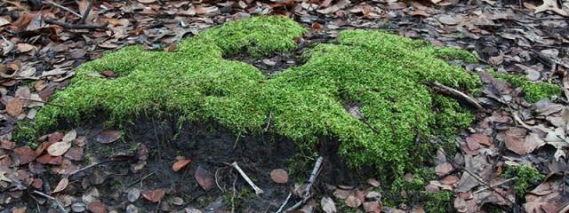 Vividly Green Moss