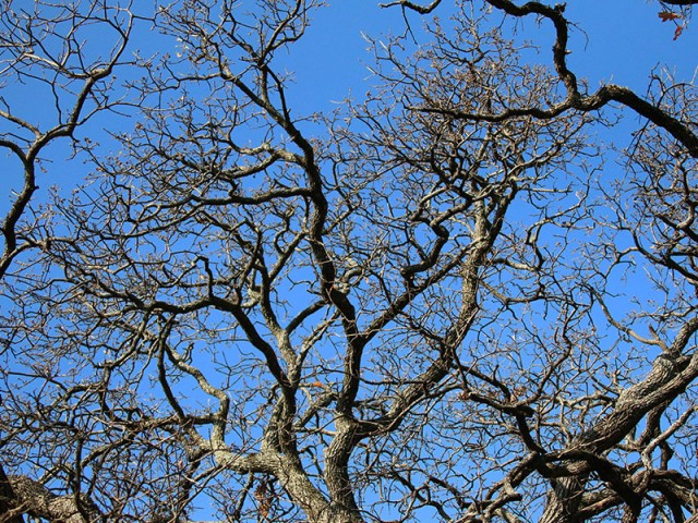 Gnarled branches.