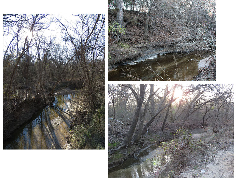 Cottonwood Branch as it flows through Coppell Nature Park