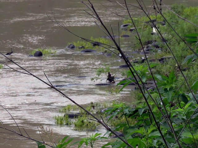 Tires are a major problem in our rivers creeks, and the surrounding bottomland woods.