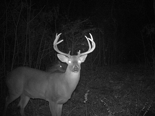 A nice buck!