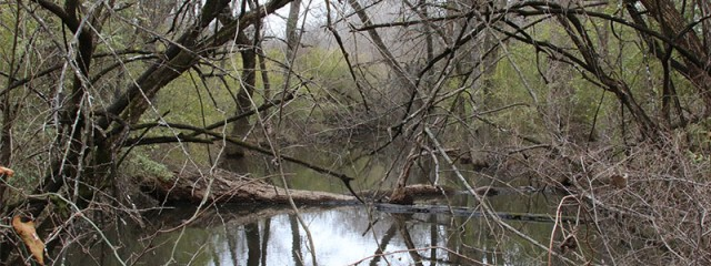 A bog located deep in the Trinity River bottomlands.