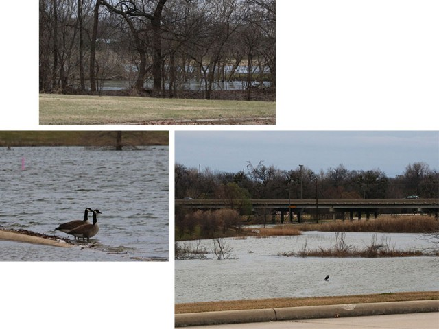 The Trinity River at high water, a pair of Canada Geese near a flooded roadway, and over-banking near Sandy Lake Road.