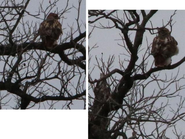 The hawks.