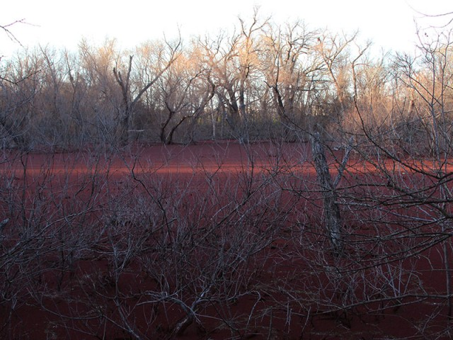 A pond of red deep in the Elm Fork bottomlands.
