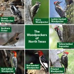 The Woodpeckers of North Texas