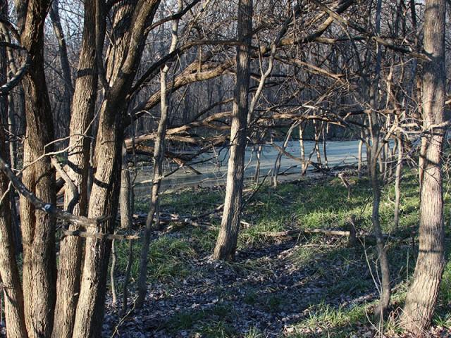 A Bottomland Bog