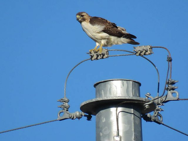 Here she is on top of a utility tower.