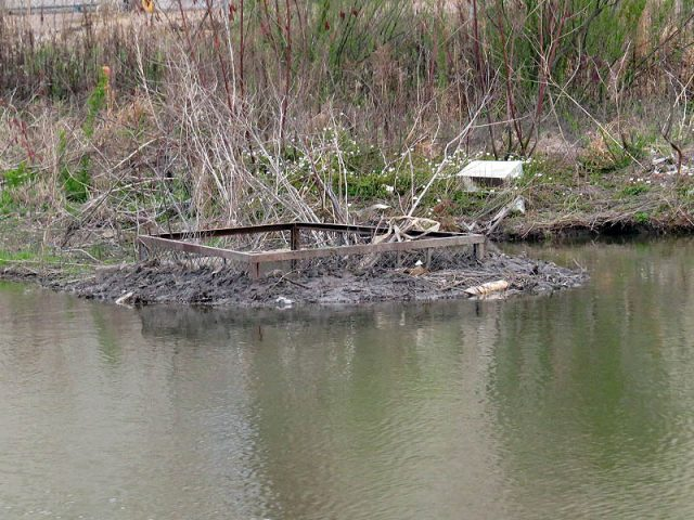 A very unique urban Beaver dam.