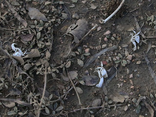 Several skeletons were scattered about.