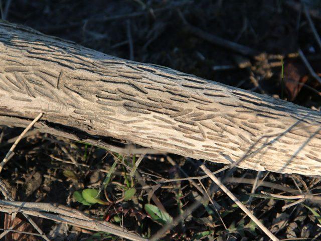 Odd driftwood.