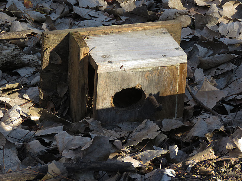 Bird boxes on the ground are of no use to people or animals.