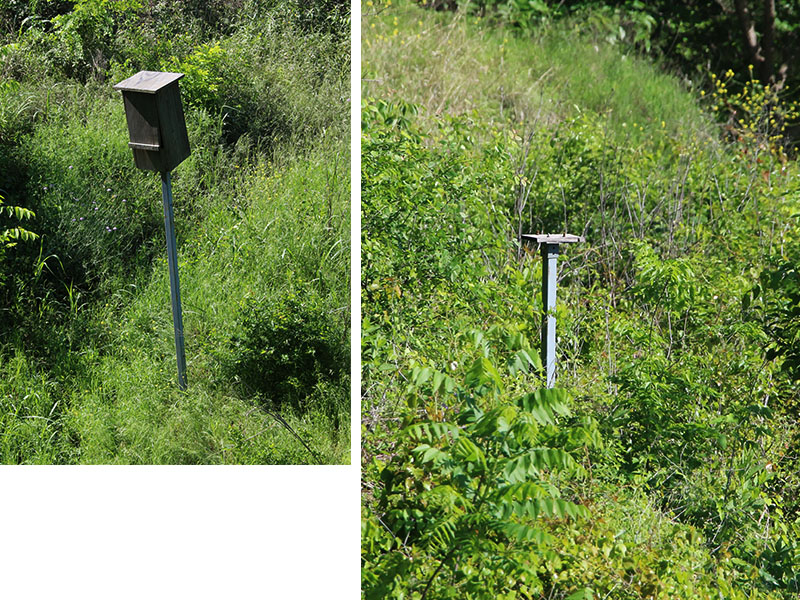 On the left, a bird box that is in decline.  The pole is leaning and the box is unsteadily mounted.  On the right, is a bare post with the nesting box missing.