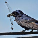 Videos - Nesting Birds